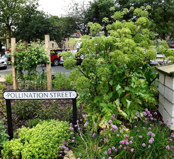 Pollination Street.jpg